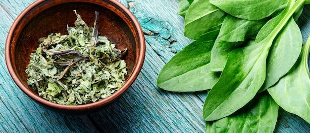 オオバコの貴重な薬用植物