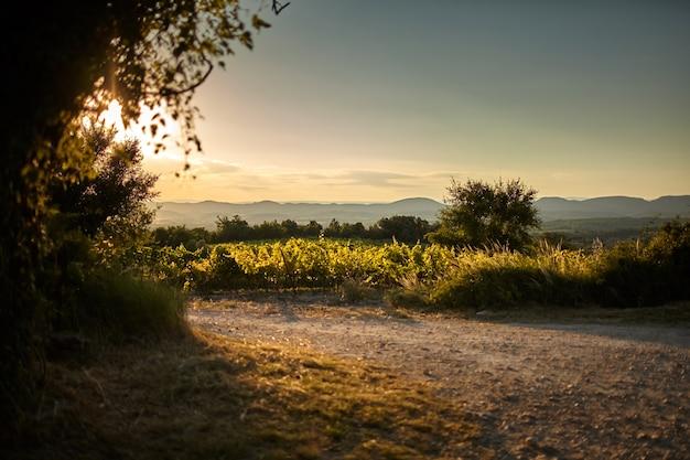 Пейзаж плантации виноградных лоз