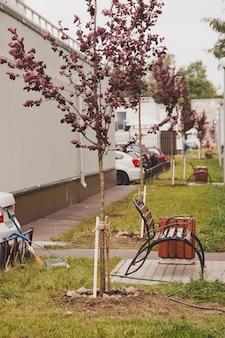 집 영역에 도시 환경에서 나무의 어린 묘목을 심었습니다. 도시의 젠트리피케이션을 위한 배경. 조경, 자연, 환경 및 생태학의 개념. 복사 공간