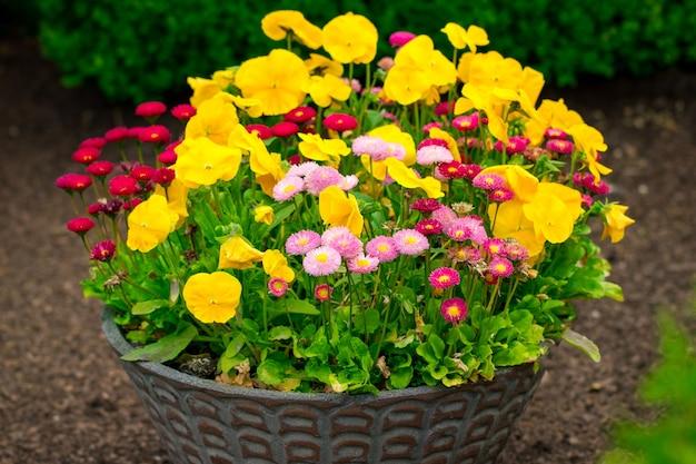Кашпо с желтыми анютиными глазками и другим цветком.