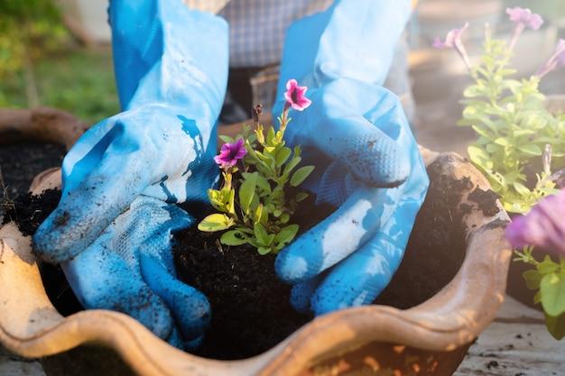 Посадка цветка. две руки завод цветок.
