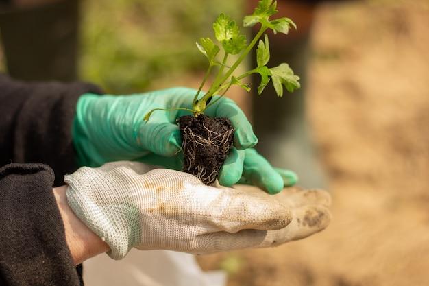 土壌に植物を植えることはクローズアップ