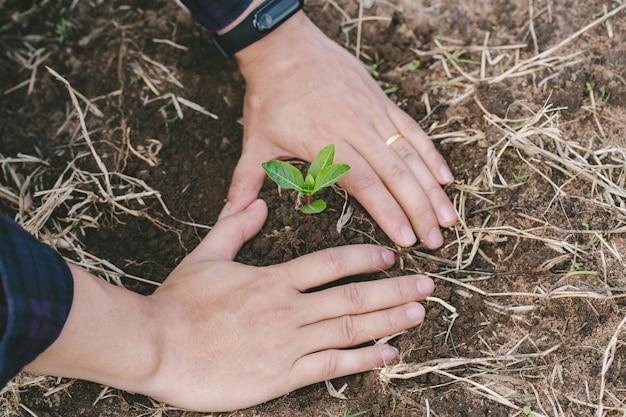 Посадка дерева. конец-вверх на руках молодого человека засаживая дерево. концепция природы