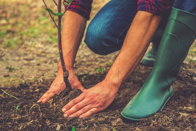 나무 심기. 정원에서 일하는 동안 나무를 심는 젊은 남자의 클로즈업 프리미엄 사진