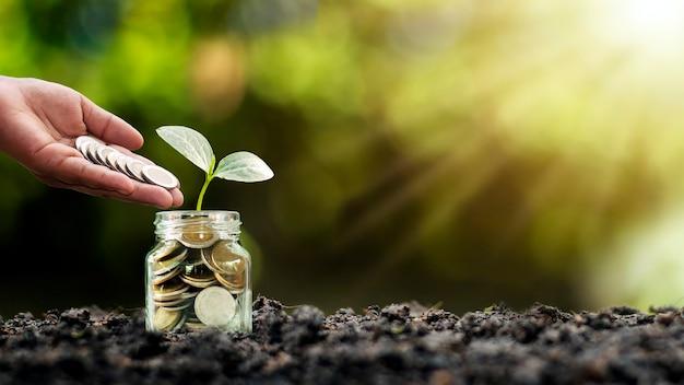 Посадка дерева в бутылке и сбор денег в бутылке, финансовые и инвестиционные идеи для роста бизнеса.