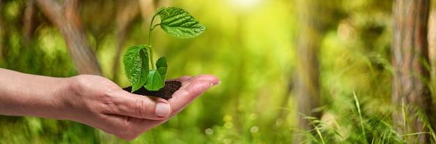 森に若い木を植えます。成長、苗。