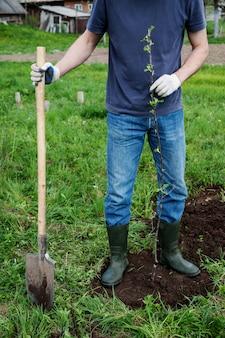 リンゴの木を植える。