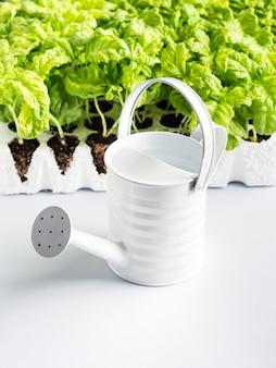 Planting basil seedlings concept