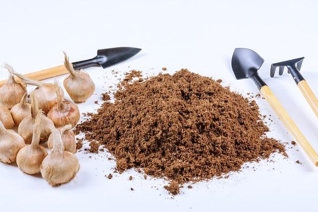 Посадка луковиц крокусов в землю. куча плодородной почвы, садовых инструментов и луковиц шафрана на белом фоне.