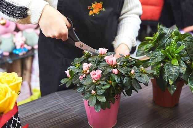꽃 가게에서 장식 식물 심기. 꽃을 돌보는 가위로 꽃집의 손.