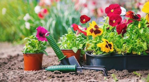 Planting a flower garden, spring summer