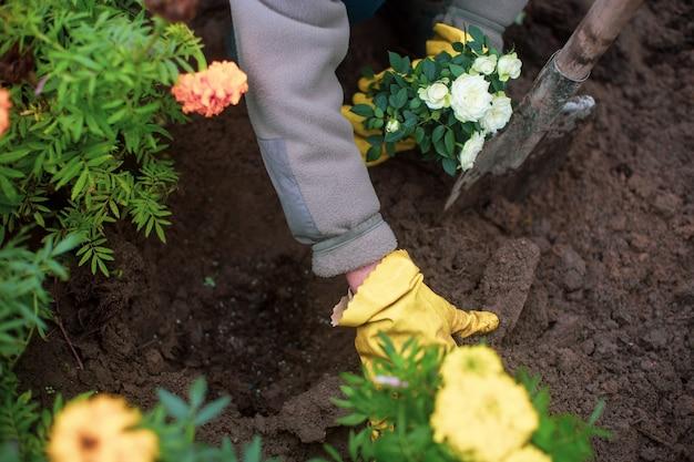 시골집 정원 침대에 농부가 꽃을 심습니다. 정원 계절 작업 개념