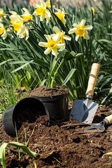 Planting flowers in the garden, garden tools, flowers
