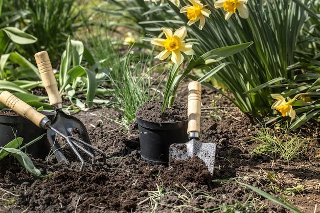 Piantare fiori in giardino, attrezzi da giardino, fiori