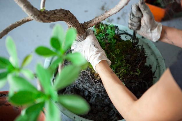 庭に花を植え、女性の手が植木鉢に観葉植物を移植しています