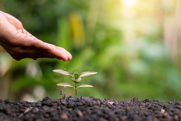 자연 환경 보전 개념에서 푸른 나무와 묘목 심기 프리미엄 사진