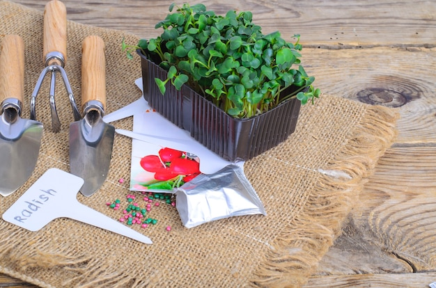 Planting microgreens. pack with radish seeds. garden tools for planting plants. studio photo