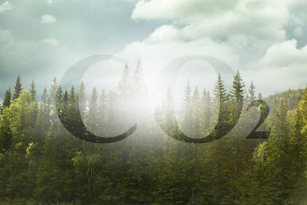 Planting more trees reduce the amount of co2 - concept image with co2 text against woodland.