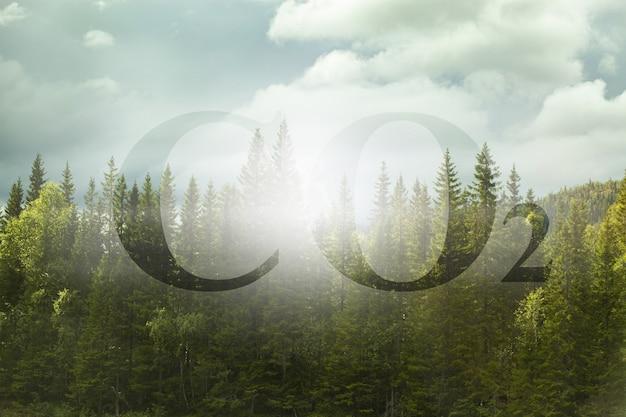 더 많은 나무를 심는 것은 co2의 양을 줄입니다 - 삼림 지대에 대한 co2 텍스트가 있는 개념 이미지.