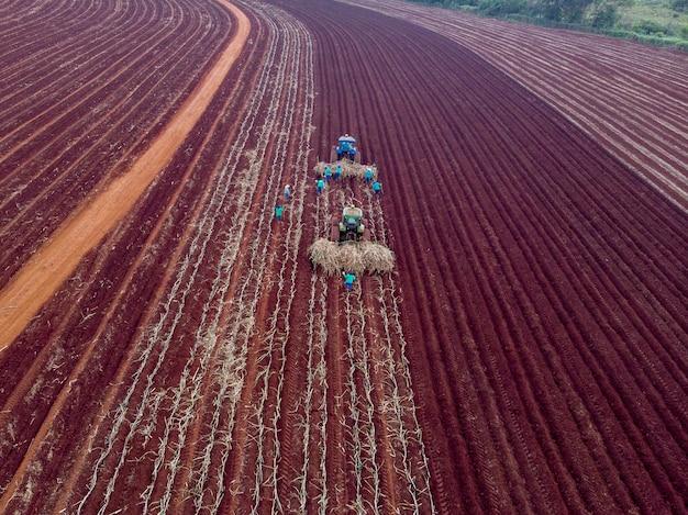 手動杖の植え付け。暑い太陽の下で杖を手で植える男性-ペデルネイラス-サンパウロ-ブラジル-03-20-2021。