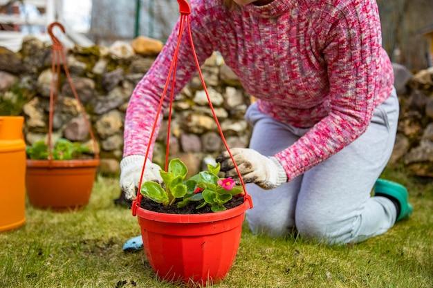 식물 심기 여자는 지상 근접 촬영에 젊은 콩나물을 심습니다 얼굴 없음