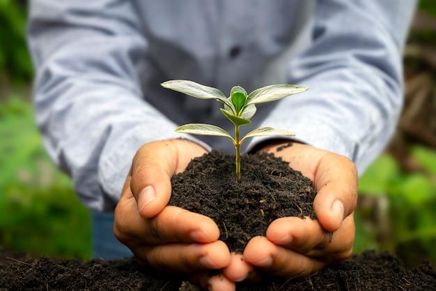 손으로 식물을 심고 비옥한 토양에서 자라는 식물을 돌봅니다.