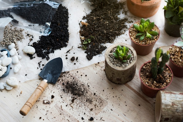 木製のテーブルに植栽植物サボテン土壌石