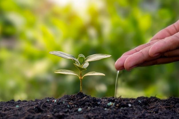 비옥한 토양에 식물을 심고 물을 주는 식물 심기 아이디어.