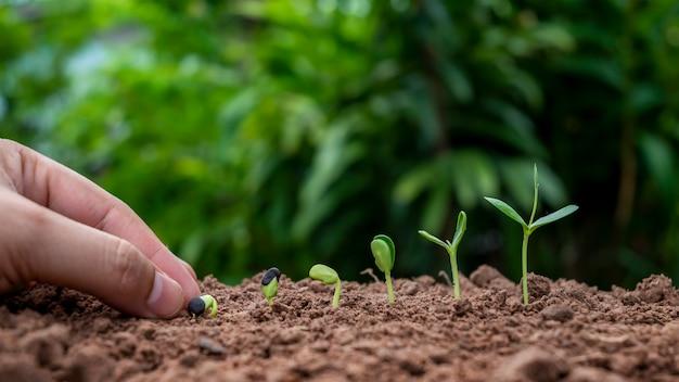 発芽または植物成長の順序で土壌に植物を植え、土壌植栽のアイデアで植物を手で植えます。