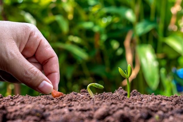 発芽または植物成長の順序で土壌に植物を植え、土壌植栽のアイデアで植物を手植えします。
