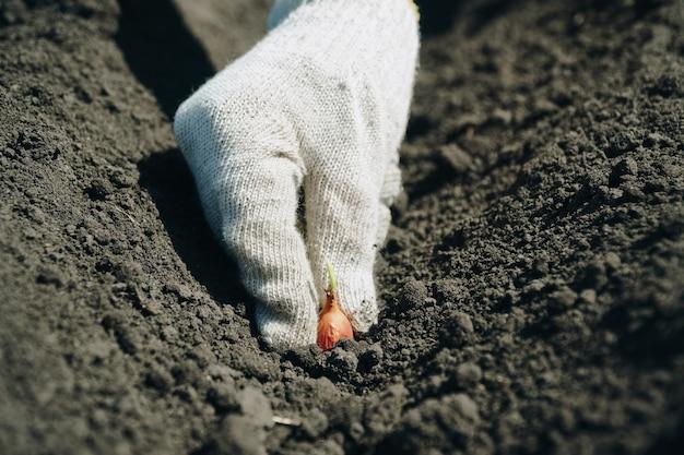 Посадка растений в землю в перчатках