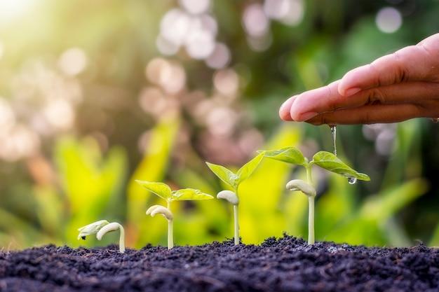 Посадка растений в почву и полив рук, включая демонстрацию стадии роста растений, идей по посадке и инвестиций для фермеров.