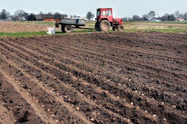 じゃがいもを畑に植える。季節の仕事。
