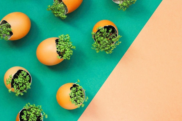 Planting seedlings in eggshells and growing useful micro-greenery at home