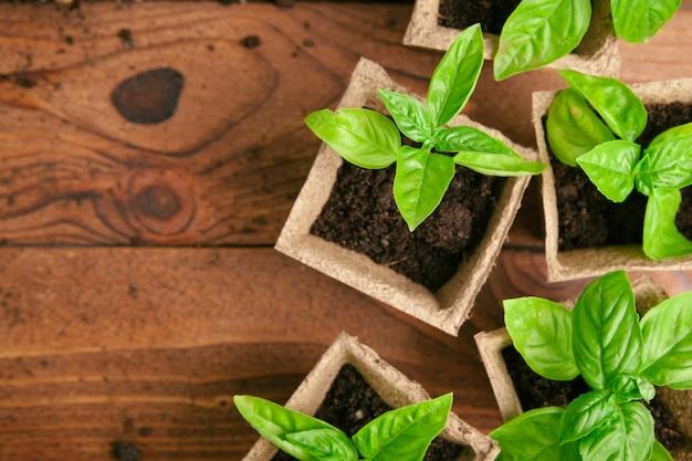春に温室で苗を植えるをクローズアップ