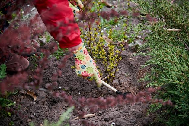 庭に苗を植える