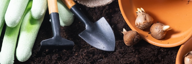 Planting spring flowers. gardening tools, flower pots and crocus bulbs on fertile soil texture background. banner.