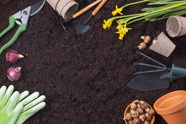Planting spring flowers. gardening tools with hyacinth and crocus bulbs on fertile soil texture background. top view, copy space.