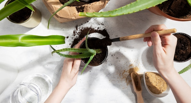家庭菜園に多肉植物を植えます。スズを再利用して植物を育てる。廃棄物ゼロ、リサイクル、再利用、アップサイクル。上面図