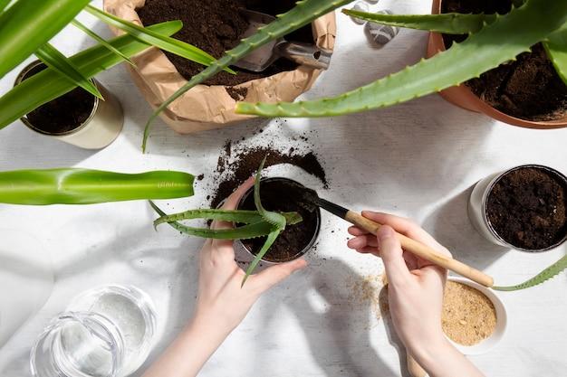 家庭菜園に多肉植物を植えます。スズを再利用して植物を育てる。廃棄物ゼロ、リサイクル、再利用、アップサイクル。