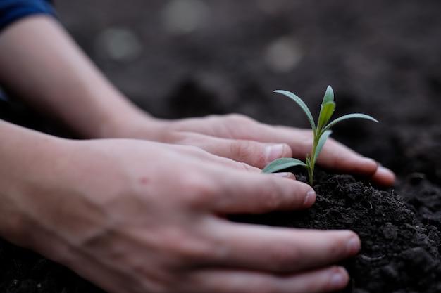 두 손으로 묘목을 토양에 심기