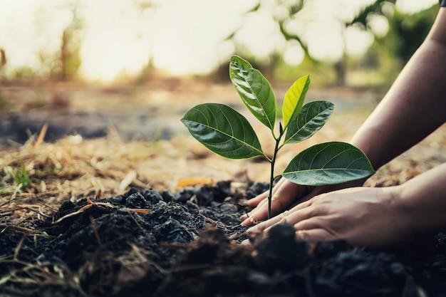 Посадка деревьев в саду. концепция спасти мир зеленая земля