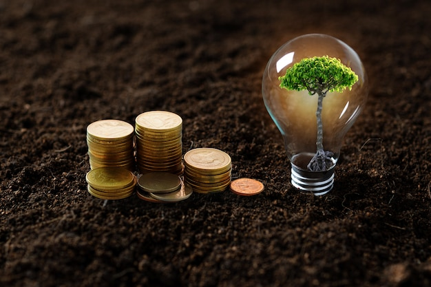 Planting tree, sapling growing up in light bulb and stacked of money coins