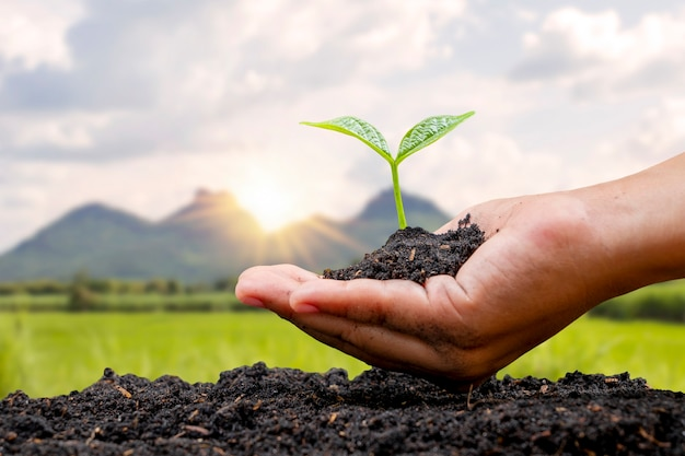 地面と夕日の背景に苗を植える農民の手による植樹、森林再生と環境保護の概念