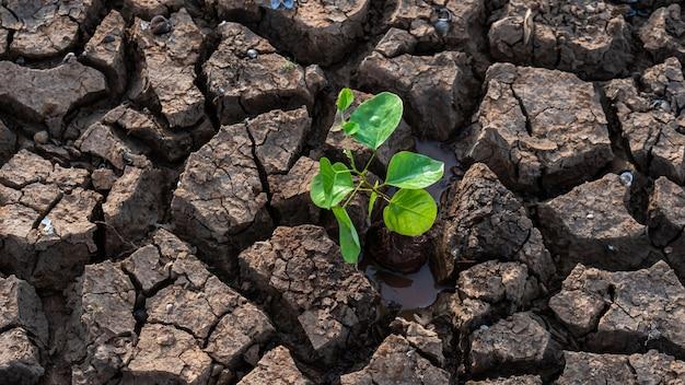 환경을 보호하기 위해 건조한 땅에 나무 심기