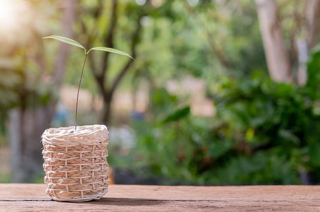 냄비에 나무 심기. 사랑 식물의 개념. 환경을 사랑하십시오.