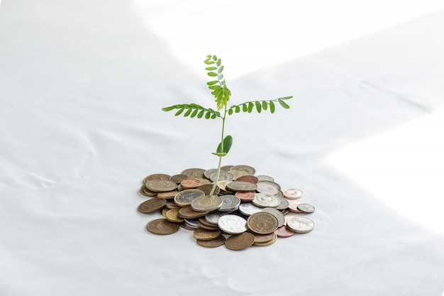 お金の山に木を植える