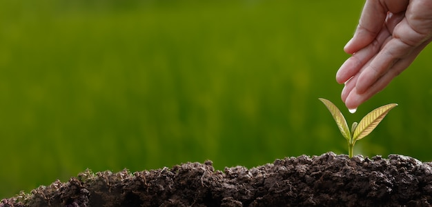Посадка деревьев в почву на фоне зелени