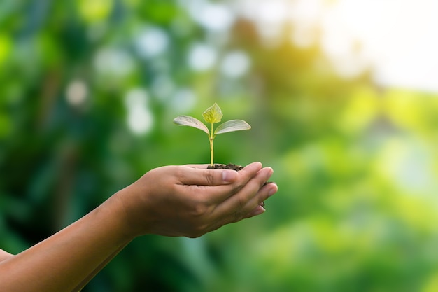 Planting trees with human hands and on bright sunny green background blur eco concept