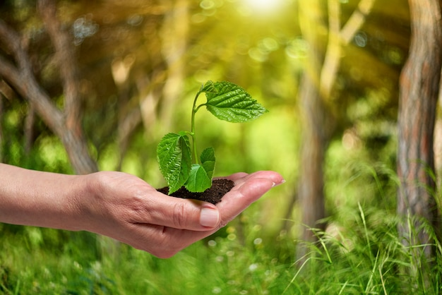 Planting a young tree in the forest.growing,seedling.new life concept.